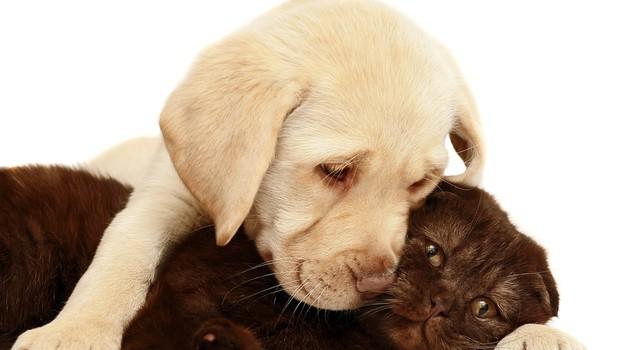 Odgovorno v posvojitev zavrženih živali (foto: shutterstock)