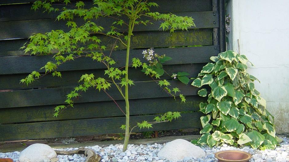 Feng šui na tvojem vrtu in balkonu (foto: arhiv Nataša Lotrič)