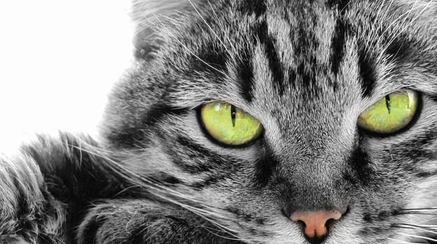 Zakaj je bolje imeti mačka kot fanta? (foto: shutterstock)