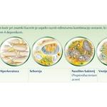 Štirje ključni dejavniki, odgovorni za pojav aken. (foto: promocijski)