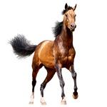 Natalija Gros: Ko žari od sreče, je kot čudovita kobila, ki svobodno teče (foto: Marcos Ferro, Shutterstock)