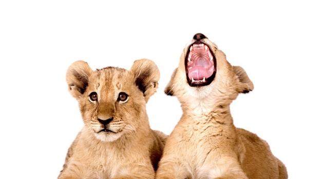 On je ljubosumen, ti rjoveš ... Čas je za pogovor! (foto: Shutterstock, Wadley)