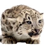 Anja Bukovec pravi, da bo v naslednjih treh letih snežni jaguar. (foto: Primož Predalič, Shutterstock, profimedia.si)