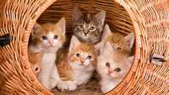 Sterilizacija in kastracija mačke - da ali ne?
