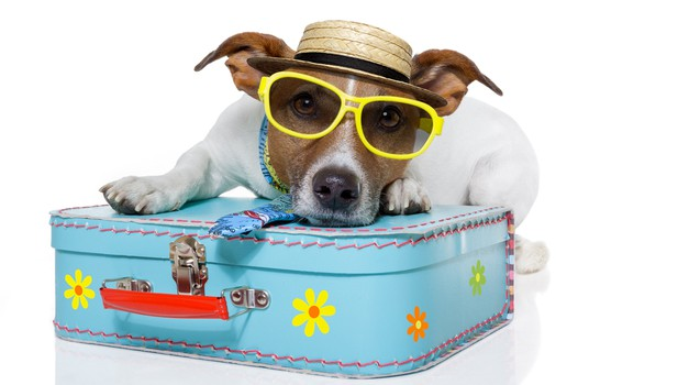 S hišnim ljubljenčkom na dopust: kaj moraš vedeti? (foto: shutterstock)