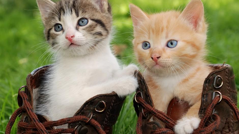 Podaritev dela dohodnine v dobrobit živali te nič ne stane! (foto: shutterstock)