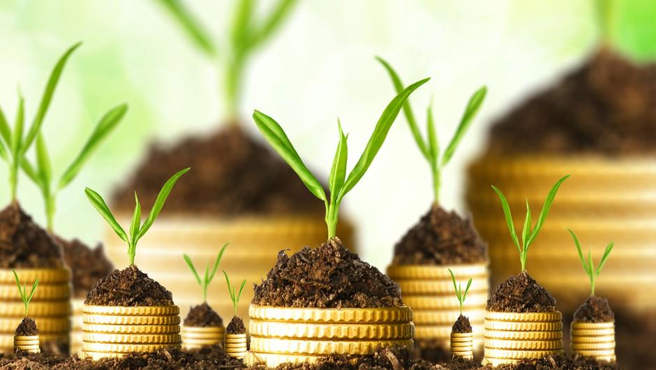 Projekt za mlade: Denar nima idej! (foto: shutterstock)