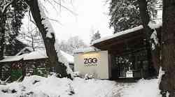 Fotograf na sledi življenju v zasneženem ljubljanskem živalskem vrtu