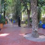Fotografije čudovitega vrta Majorelle v Maroku (foto: Kaja Antley)