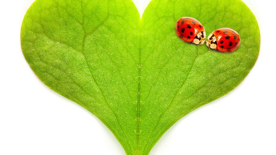 Zakoni ljubezni: Podarjamo dva izvoda uspešnice! (foto: shutterstock)