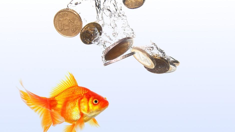 Tvoj srečni bankovec postane talisman (foto: shutterstock)