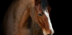 Glasbeniki, plesalci in modni oblikovalci za dobrobit konjev!
