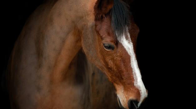 Glasbeniki, plesalci in modni oblikovalci za dobrobit konjev! (foto: shutterstock)