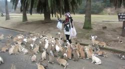 Video: Otok, kjer turiste preganjajo ljubki zajčki