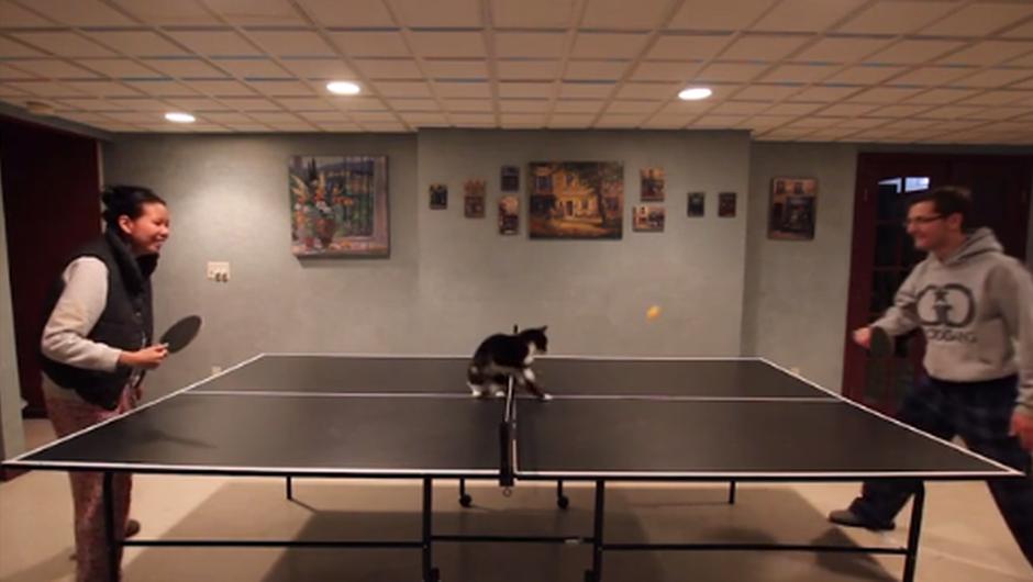 Veš, kaj je še bolj zabavno, kot maček na ping pong mizi? Dva mačka na ping pong mizi. (foto: SB Nation)
