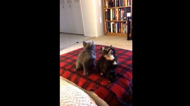 Mačja koreografija (foto: YouTube)
