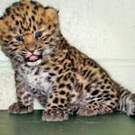 Tole je malček iz živalskega vrta Marwell