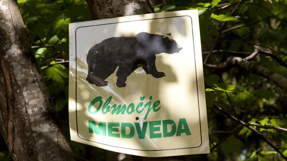 Na razstavo Medved v Sloveniji v Tehniškem muzeju (foto: profimedia)