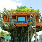 Hiša na drevesu, Okinawa, Japonska (foto: profimedia)