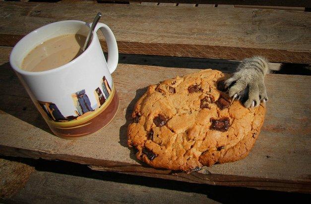 Tatinske mačke, ujete s tačko v marmeladi! (foto: profimedia)