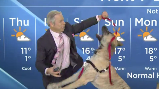 Po tej vremenski napovedi verjetno nihče ni vedel, kakšno bo vreme (foto: YouTube)
