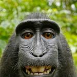 Bolj in manj slavni selfie-ji živali! (foto: profimedia)