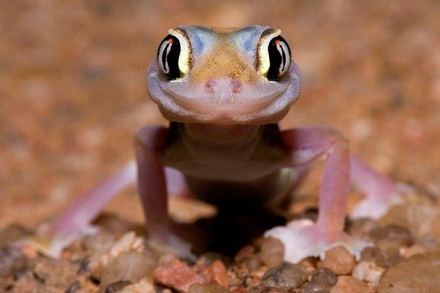 Smehljajoči se portreti nadvse različnih živali (foto: profimedia)