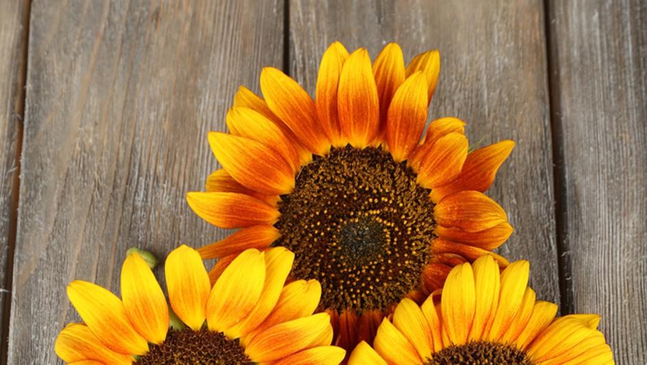 Shranjevanje zelenjavnih semen za lepšo prihodnost (foto: shutterstock)
