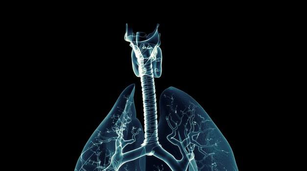 Predavanje o tem, kako človeški možgani upravljajo dihanje (foto: profimedia)