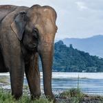 Prisrčno, a nevarno druženje deklice in slona (foto: profimedia)