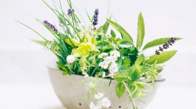 Zelišča - zdravilne rastline so z nami od nekdaj (foto: profimedia)