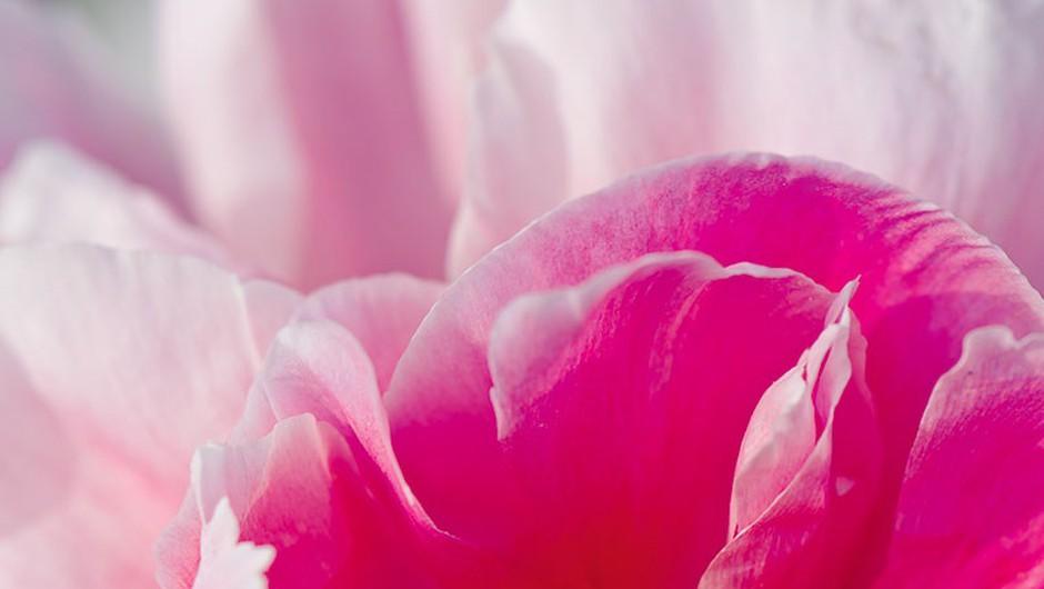Do žametne polti s kremo iz potonikinih cvetov (foto: L'Occitane)