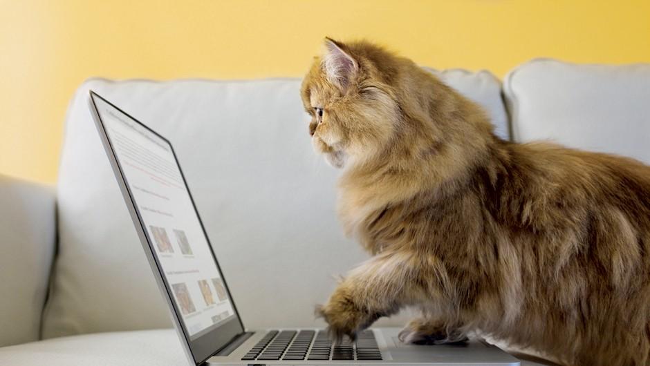 12 noro hudih spletnih strani, ki jih moraš obiskati (foto: Getty Images)
