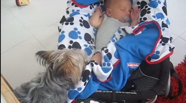VIDEO: Kar je ta psička naredila dojenčku, te bo povsem presenetilo! (foto: Youtube)