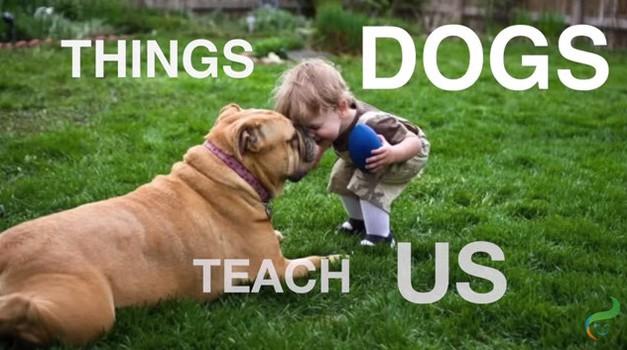 VIDEO: Čudovite stvari, ki nas jih naučijo psi (foto: Youtube)