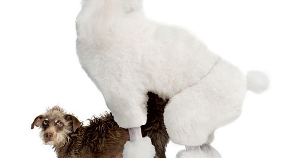 4 načini, kako je seks po pasje lahko perfekten (foto: Getty Images)