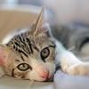 5 znakov, da si bila v prejšnjem življenju mačka