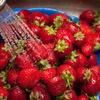 10 najbolj škropljenih vrst sadja in zelenjave leta 2016