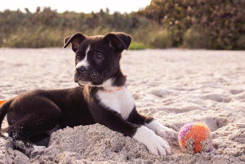 To je (dober) razlog, zakaj je športanje v družbi tvojega psa dobro zate! (foto: Unsplash.com/Andrew Pons)