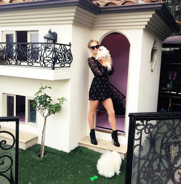 Psički Paris živijo namreč v luksuzni pasji vili, za katero je odštela kar okoli 400.000 evrov.