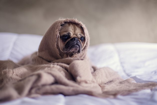 4 sijajni triki za boj proti jesenski utrujenosti (foto: Unsplash.com/Matthew Henry)