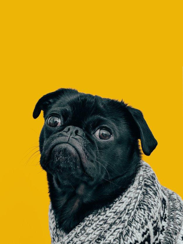 ZATO imajo moški tako radi 'doggy style'! (odgovor COSMO novinarja) (foto: Charles Deluvio / Unsplash)
