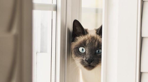 Zakaj ti tvoja mačka vsakič sledi v kopalnico? Razlog se skriva v tem! (foto: Unsplash/Alex Bertman)