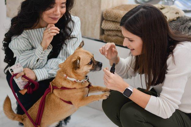 Si že slišala za TALE nov način, kako pomiriti kužka med prazniki? (pozor, NARAVNO!) (foto: Promocijsko gradivo)