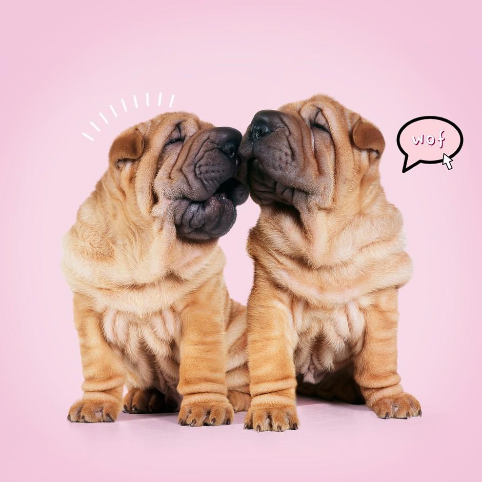 KUŽA: Tako ti vsak dan pokaže, da te ima neskončno rad (znaki, ki jih ne spreglej) (foto: Profimedia)