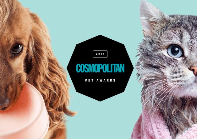 Izbiramo najboljše izdelke za MALE ŽIVALI (predstavljamo PET awards 2021!)