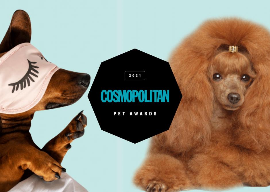 Razkrivamo SKRIVNEGA žiranta izbora PET AWARDS 2021 (VIDEO)